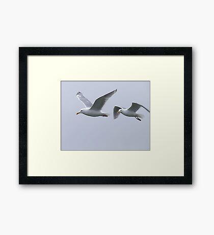Gulls in a Storm (5) Framed Print