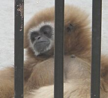 Monkey- Gentry Zoo, Arkansas by llc2010