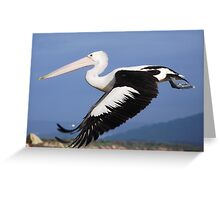 Pelican Taking Off! Greeting Card