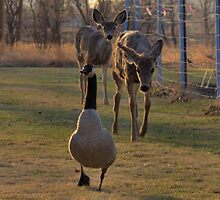 Mother Goose by JamesA1