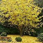 Autumn in Toowoomba by PhotosByG