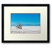 dead tree at salton sea Framed Print