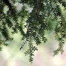 Feathery Pines by Littlehalfwings