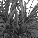 Yucca Plant by Joan Wild