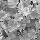 Geranium Leaves by Joan Wild
