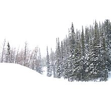Snow Falling on Firs, Fortress Mountain Photographic Print