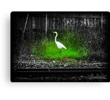 Surving the Cement Canvas Print