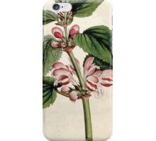 The Botanical magazine, or, Flower garden displayed by William Curtis V5 v6 1792 1793 0058 Lamium Orvala, Balm Leaved Archangel, Dead Nettle iPhone Case/Skin