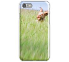 Orange & White Italian Spinone Dog in Action iPhone Case/Skin