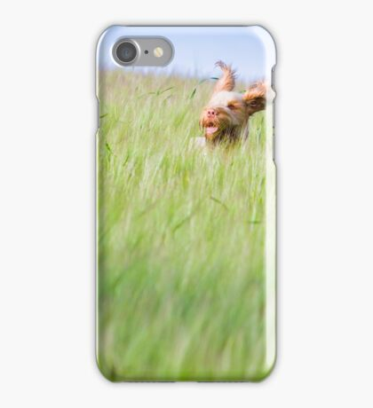 Orange and White Italian Spinone Dog in Action iPhone Case/Skin