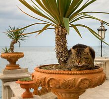 Cat in plant pot by Ian Middleton