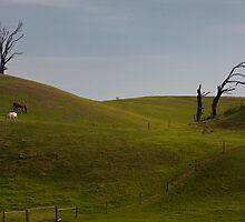 Near Cape Schanck 2 by rjpmcmahon