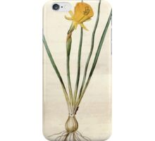 The Botanical magazine, or, Flower garden displayed by William Curtis V3 V4 1790 1791 0033 Narcissus Bulbocodium, Hoop Petticoat Narcissus iPhone Case/Skin