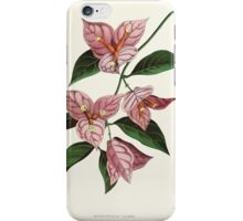 Familiar Flowers of India With Colored Plates, Lena Lowis 0097 Bougainvillia Glabra iPhone Case/Skin