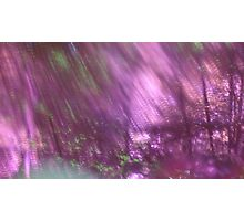 Back to the vivid forest n°3 Photographic Print