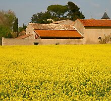 Farm buildings and yellow crop Southern France by Paul Pasco
