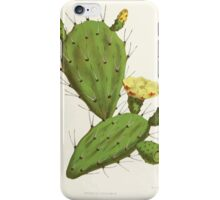 Familiar Flowers of India With Colored Plates, Lena Lowis 0125 Opuntia Vulgaris iPhone Case/Skin