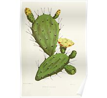 Familiar Flowers of India With Colored Plates, Lena Lowis 0125 Opuntia Vulgaris Poster