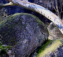 rock and limb by Fleur Stelling