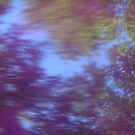 Back to the vivid forest n°5 by edend
