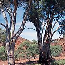 Brachina Gorge, Flinders Ranges, South Australia by Adrian Paul