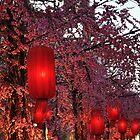 Pink Cherry Blossom Red Lanterns by j0sh
