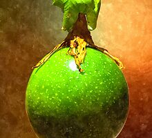 Passion fruit by MaxSteinwald