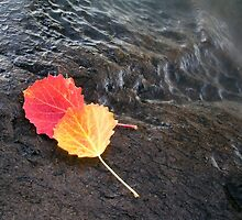 Colorful leaves by ibphotos