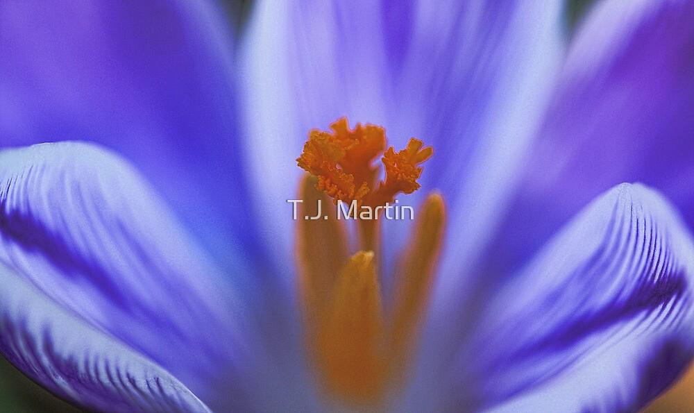 Purple Crocus - Beauty That Lies Inside by T.J. Martin