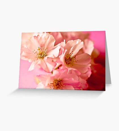 Blossoms in Bloom Greeting Card