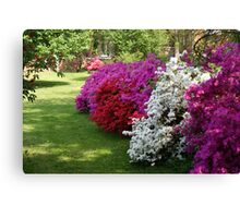 Azaleas......in dazzling colors! Canvas Print