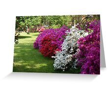 Azaleas......in dazzling colors! Greeting Card