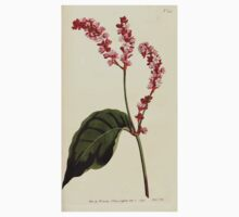 The Botanical magazine, or, Flower garden displayed by William Curtis V5 v6 1792 1793 0145 Polygonum Orientale, Tall Persicaria Kids Tee