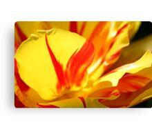 Stripey Petals Canvas Print