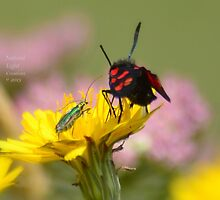 """"""" Little Green And Spotty """" by Richard Couchman"""
