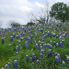 Bluebonnet Hill by Cathy Jones