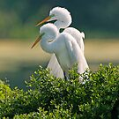 Happily Married Egrets by Bonnie T.  Barry