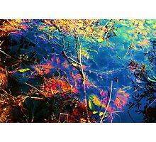 organic lumiere Photographic Print