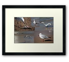 The Busy Life Of Mr Gershwin Gull Framed Print
