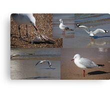 The Busy Life Of Mr Gershwin Gull Canvas Print