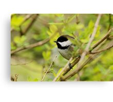 Hidden Amid A Jungle of Twigs and Leaves Canvas Print