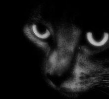 Mr. Binx in Black & White by Carrie Bonham