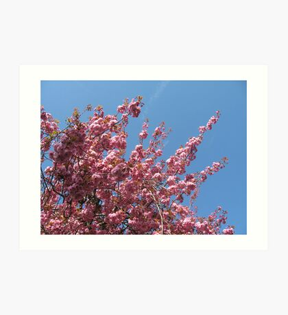 Pink blossoms against the blue sky Art Print