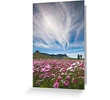Wild Cosmos Field Greeting Card
