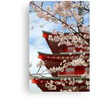 Cherry Blossom Season Canvas Print