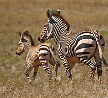 Follow me mammy! by Konstantinos Arvanitopoulos