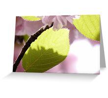 Cherry Blossom & Leaf Greeting Card