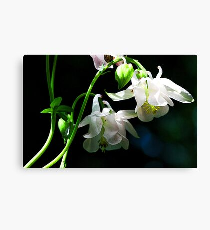 White Columbine - The Shade Garden Canvas Print