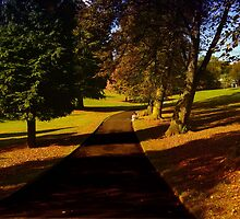 Beechwood Park by Ann Persse