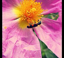 pink flower - red bug by FandomizedRose